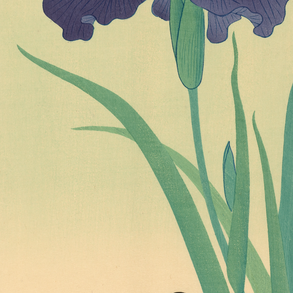 Waterhen and Iris by undefined