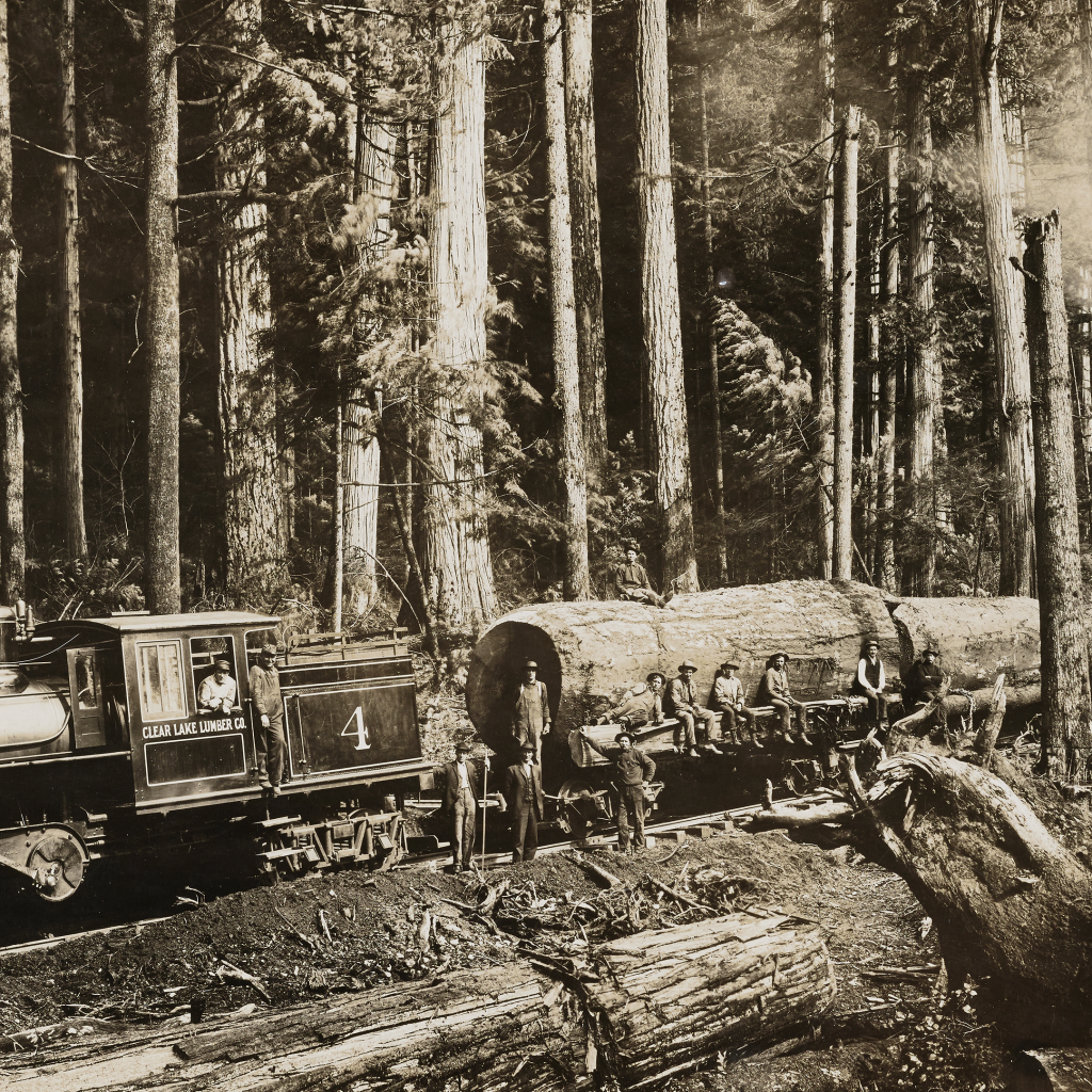 Logging Train and Donkeys in the Wonderful Woods of Washington by undefined