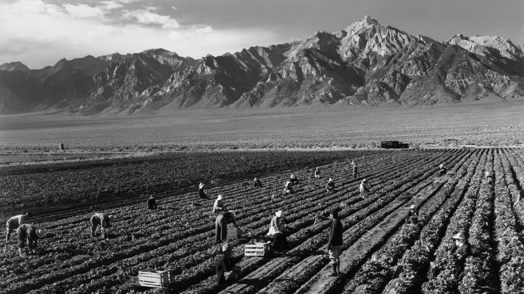 Farm workers, Manzanar Relocation Center, California by Ansel Adams