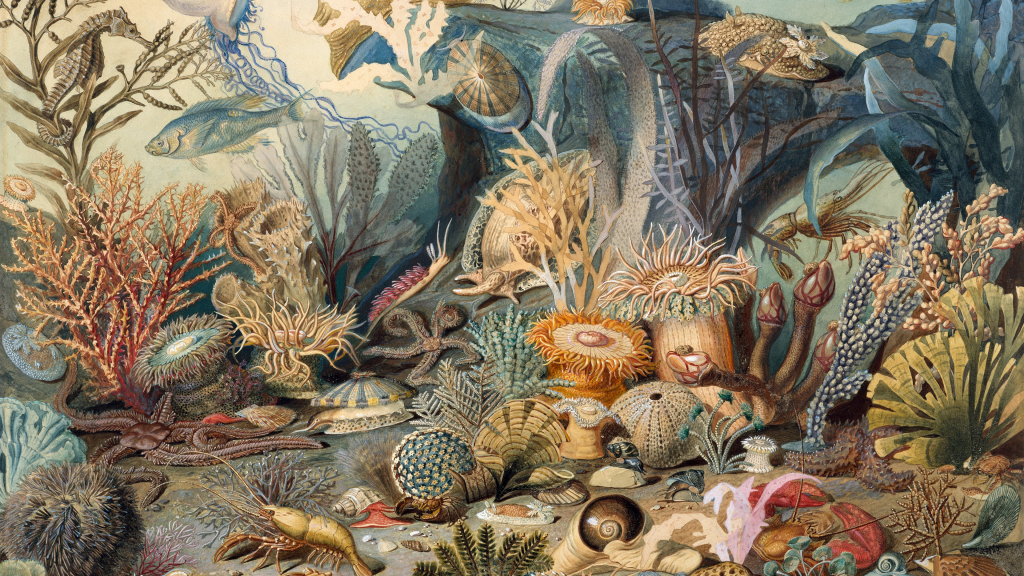 Ocean Life by James Sommerville