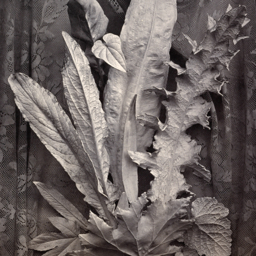 An Arrangement of Tobacco Leaves and Grass by Charles Aubry