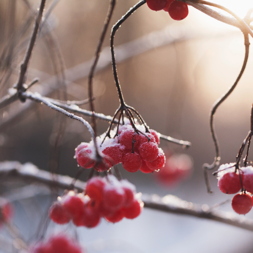 Winter Berries by undefined
