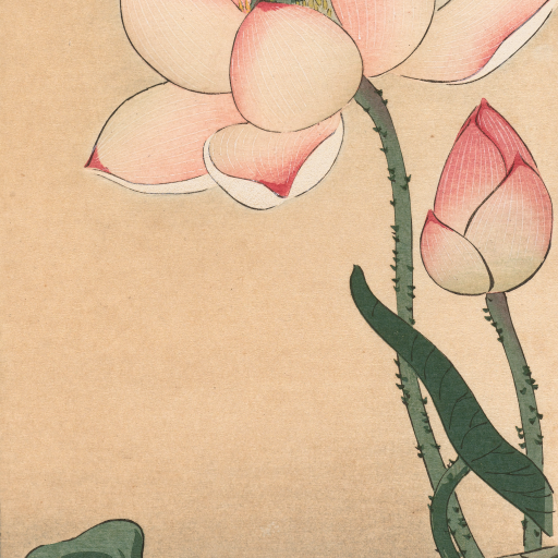 Gallinule with Lotus Flowers by Ohara Koson