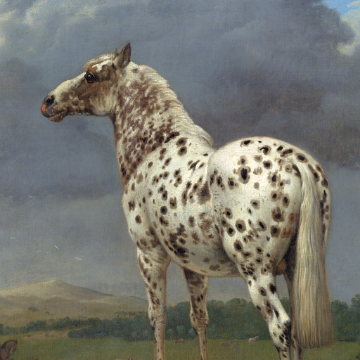 "The ""Piebald"" Horse by undefined"