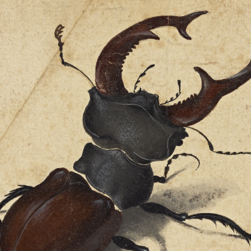 Stag Beetle by undefined