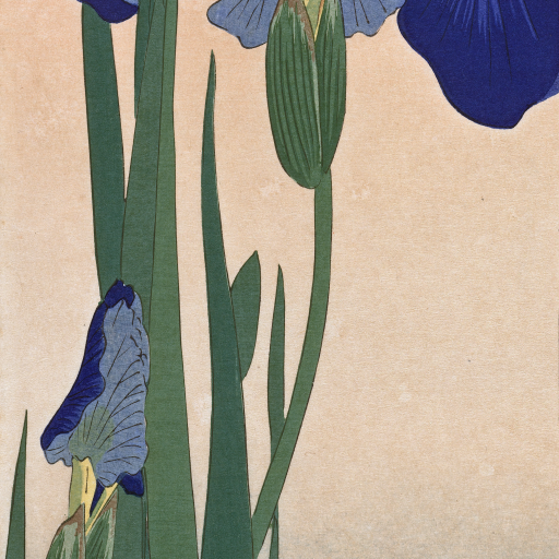 Blue Irises by undefined