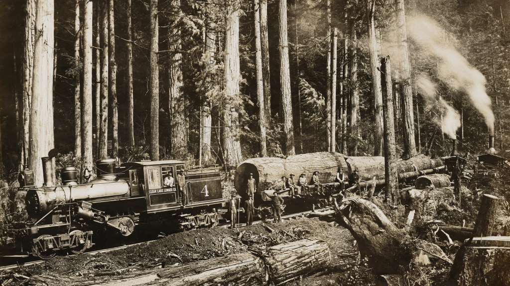 Logging Train and Donkeys in the Wonderful Woods of Washington by Darius Kinsey
