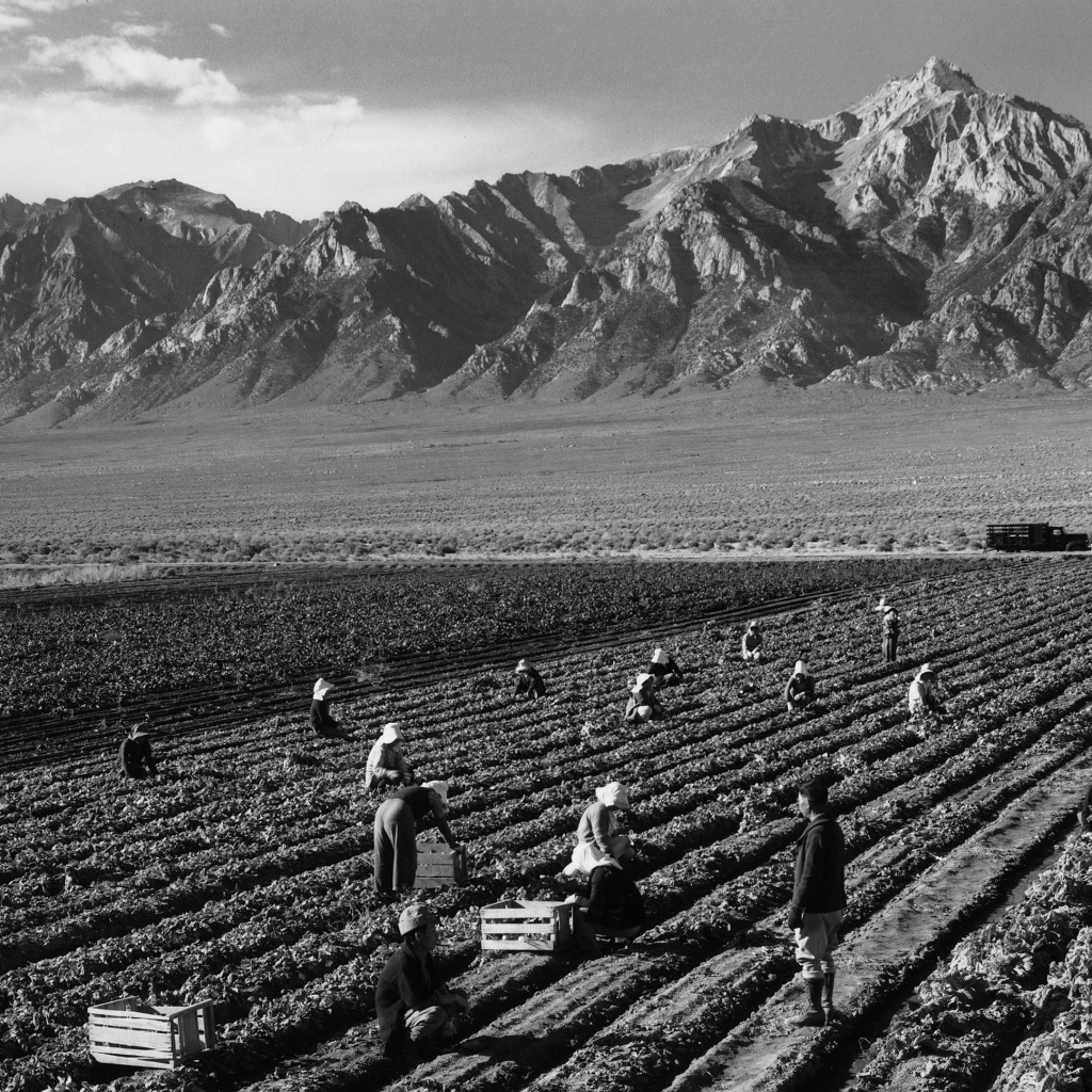 Farm workers, Manzanar Relocation Center, California by undefined